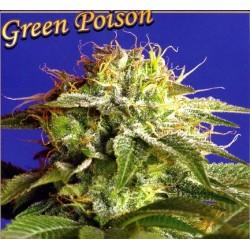 GREEN POISON 5 + 2 semillas feminizadas