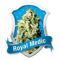 Royal Medic 1 semilla feminizada