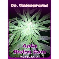 Melon Gum autofloración 1 semilla