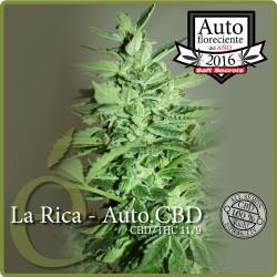 La Rica Auto- CBD 1 semilla feminizada