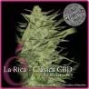 La Rica - CBD Classic feminizada 1 semilla