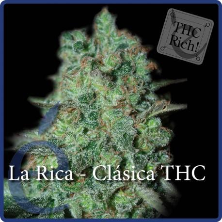 La Rica Clásica THC 1 semilla feminizada