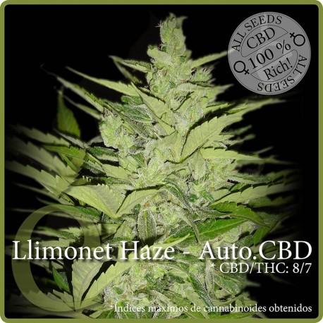 Llimonet Haze - Auto.CBD 1 semilla
