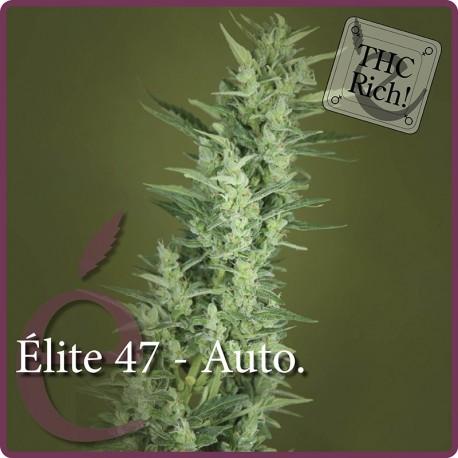 Élite 47 Auto 1 semilla