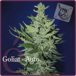 Goliat Auto 1 semilla