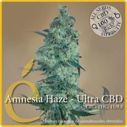 Amnesia Haze Ultra CBD 1 semilla