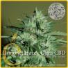 Llimonet Haze Ultra CBD 1 semilla