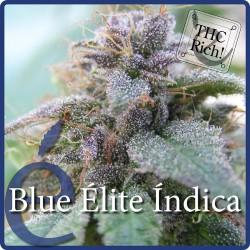 Blue élite Indica 1 semilla