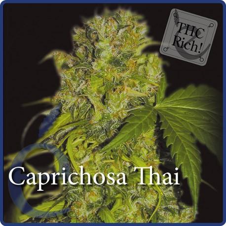 Caprichosa Thai 1 semilla