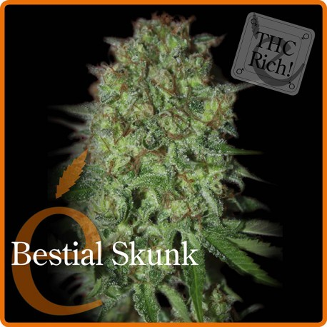 Bestial Skunk 1 semilla