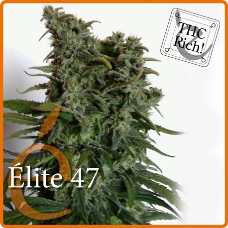 Élite 47 , 1 semilla