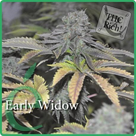 Early Widow 1 semilla