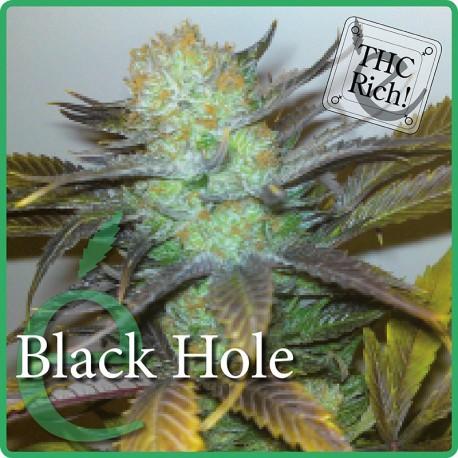 Black Hole 1  semilla