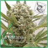 La Katana 1 semilla