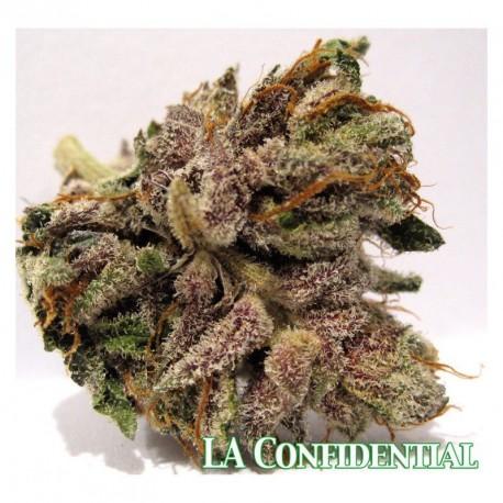 L.A. Confidential Feminizadas 1 semilla