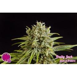 Fruity Jack / Jack el Frutero 1 semilla feminizada