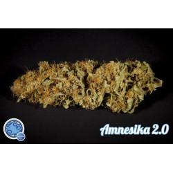 Amnesika 2.0, 1 semilla feminizada