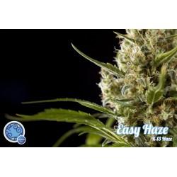 Easy Haze / K13-Haze, 1 semilla feminizada