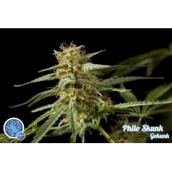 Philo Skunk / Gokunk 1 semilla feminizada