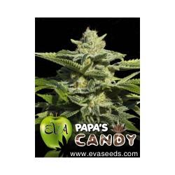 Papa´s Candy 1 semilla feminizada