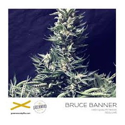 BRUCE BANNER 25 semillas regulares