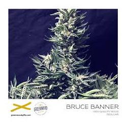BRUCE BANNER 25 semillas regulares