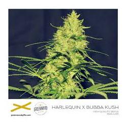 HARLEKIN X BUBBA KUSH, 25 semillas regulares