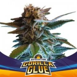Gorilla Glue Auto 1 semilla
